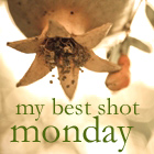 Best Shot Monday